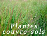 plantes couvre sols au CTH
