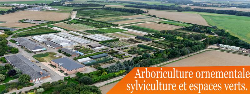collection Arboriculture ornementale sylviculture et espaces verts cthgx