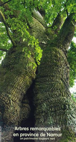 arbres remarquables en province de Namur